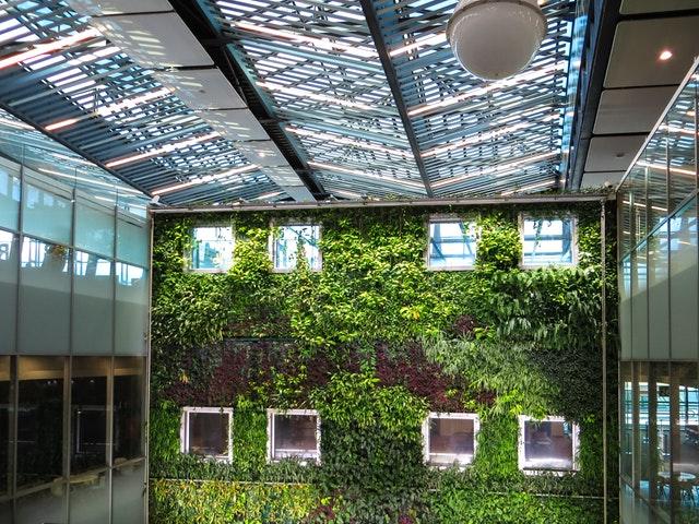 Stena s oknami porastená zeleňou