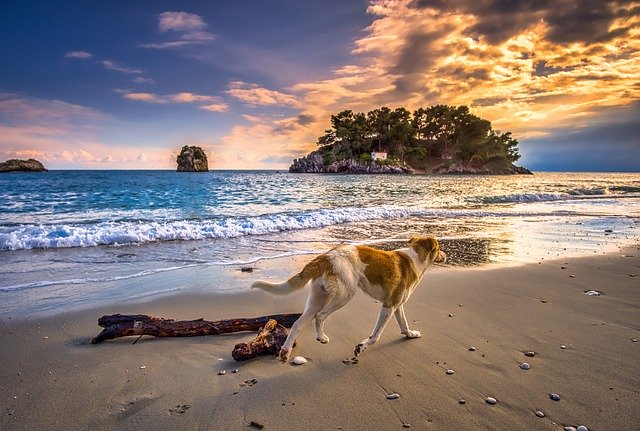 Pes ide po pieskovej pláži pri mori.jpg