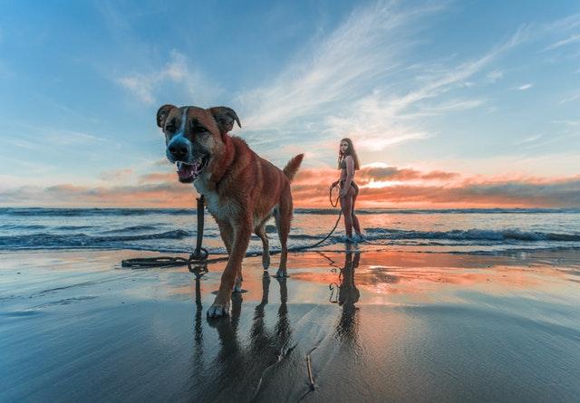 Žena v plavkách stojí na pláži a na vôdzke drží veľkého psa.jpg