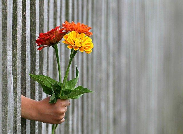 Človek má prestrčenú ruku cez plot a drží kyticu kvetov.jpg