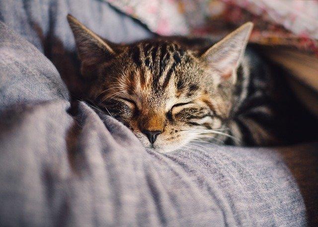 Vytvorte svojej mačke priestor a miesto, kde si môže v kľude oddýchnuť a aj sa zabaviť!